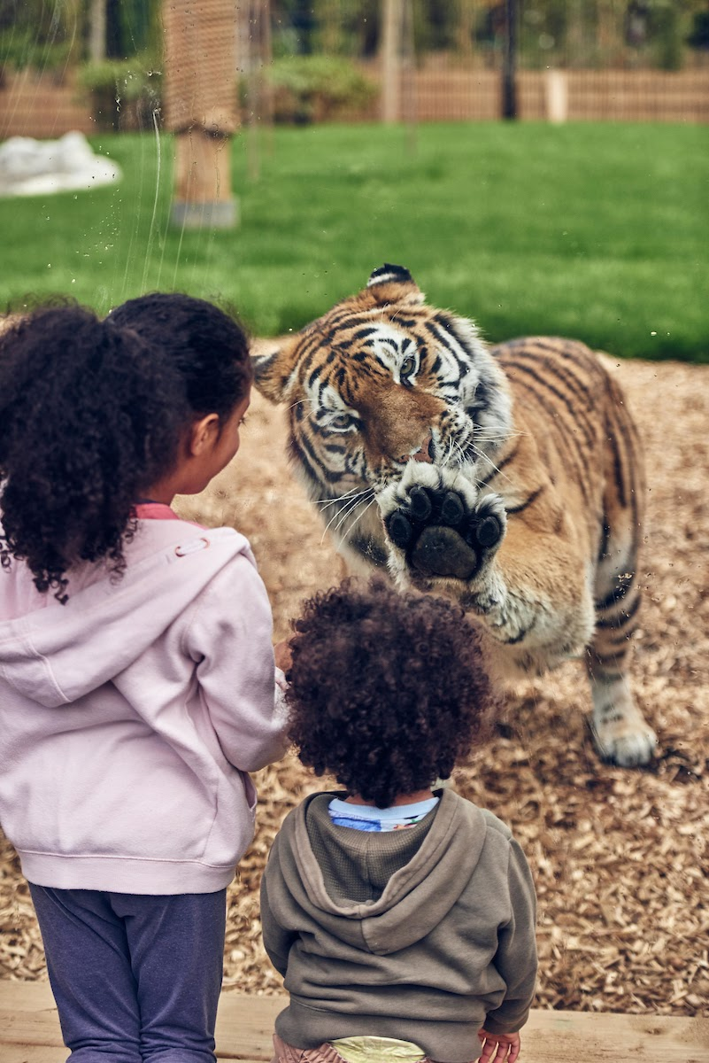 tiger rock chessington world of adventures