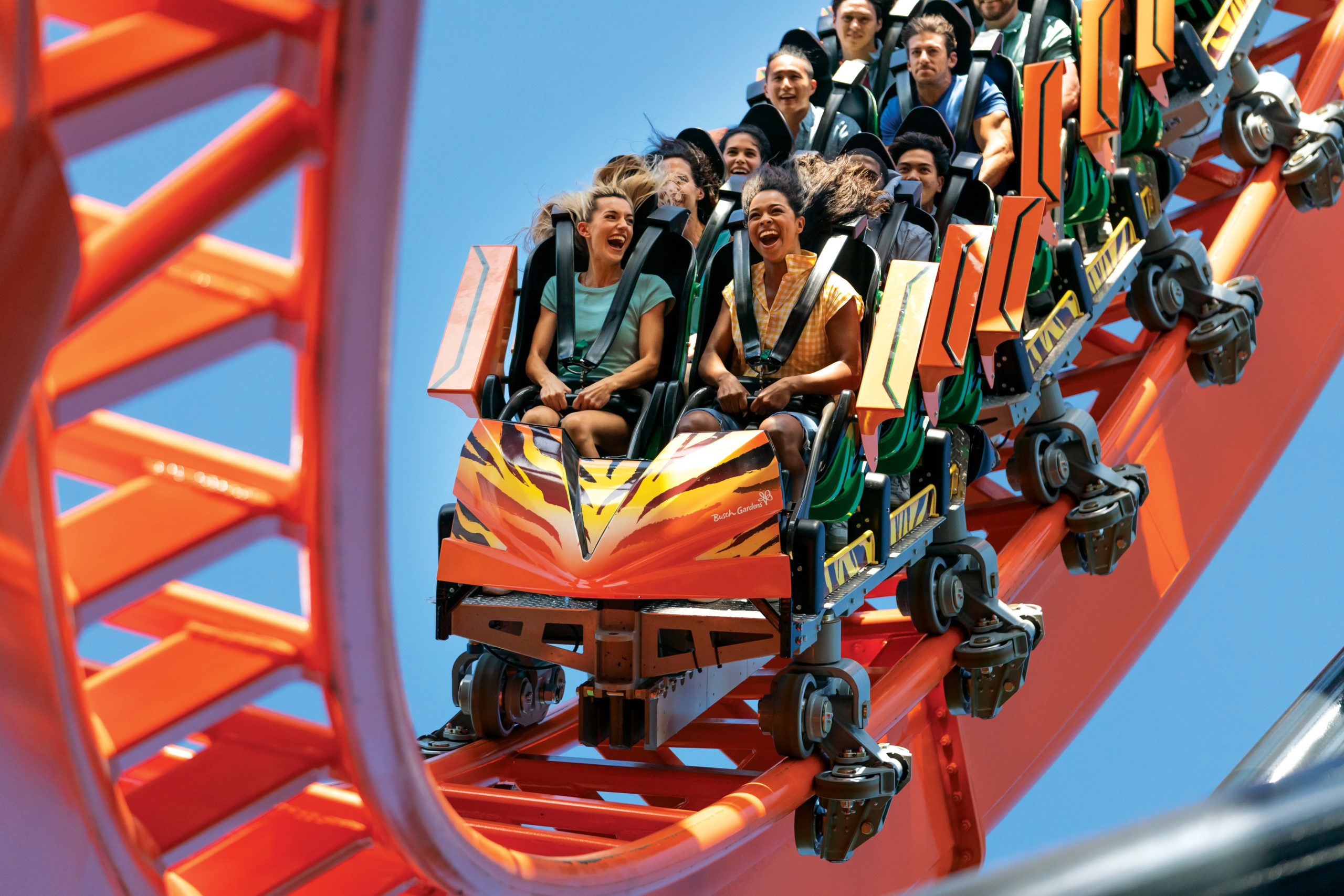 Tigris at Busch Gardens Tampa Bay