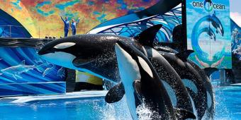 *NOW CLOSED* Win The Ultimate SeaWorld Parks and Entertainment Theme Park Experience