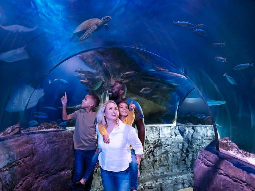 Family inside an underwater tunnel at Couple looking the shark tank at SEA LIFE London Aquarium