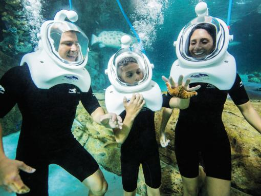 SeaVenture underwater walking tour at Discovery Cove